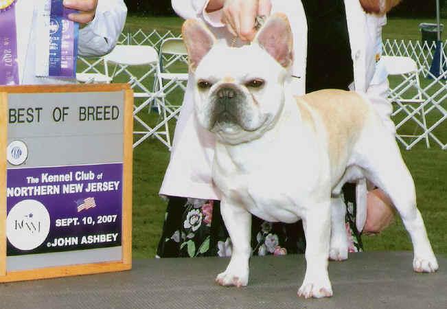 JaPaCa's French Bulldogs - Sawyer's Pedigree |